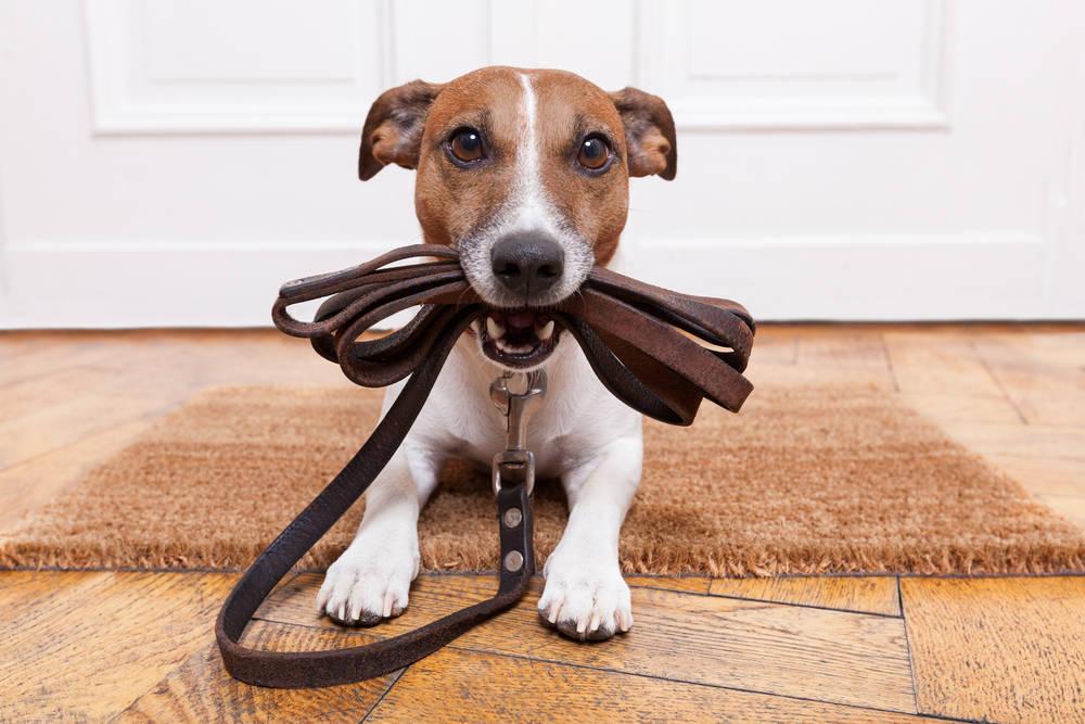 Regalos originales para perretes